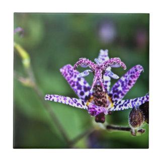 Flor púrpura del lirio de sapo de Tricyrtis Azulejo Cuadrado Pequeño