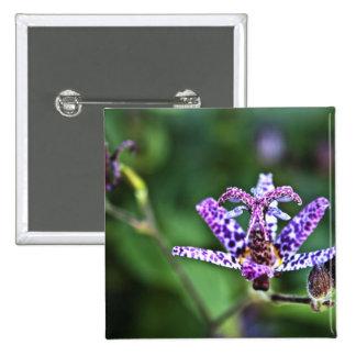 Flor púrpura del lirio de sapo de Tricyrtis Pins