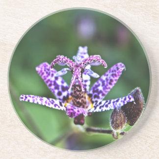 Flor púrpura del lirio de sapo de Tricyrtis Posavasos Para Bebidas