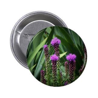 flor púrpura del tasseld pins