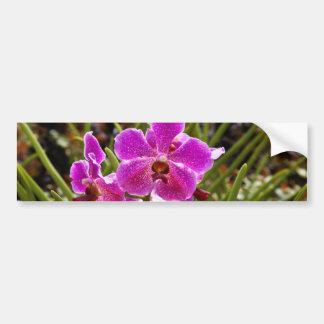 Flor púrpura dentro del jardín nacional de la pegatina para auto