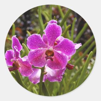 Flor púrpura dentro del jardín nacional de la pegatina redonda