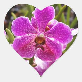 Flor púrpura dentro del jardín nacional de la pegatina en forma de corazón