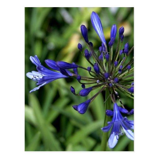 Flor púrpura en hierba postales