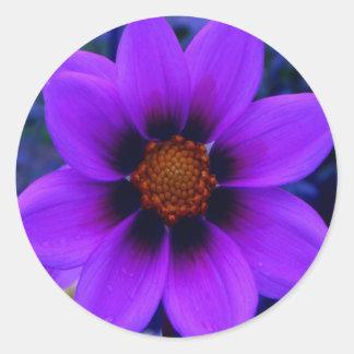 Flor púrpura en la oscuridad pegatina redonda