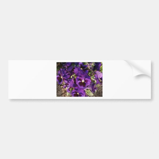 Flor púrpura en parque etiqueta de parachoque