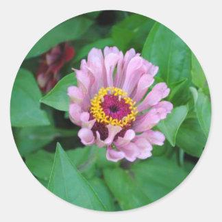 Flor púrpura etiquetas redondas