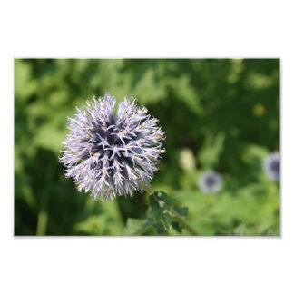 flor púrpura fotografía