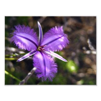Flor púrpura fotografías