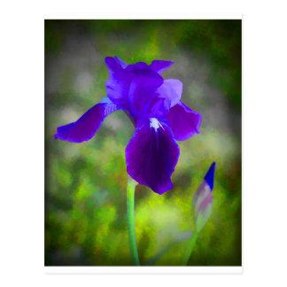 Flor púrpura germánico Digital del iris pintada Postal