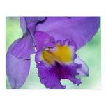 Flor púrpura hermosa de la orquídea tarjeta postal