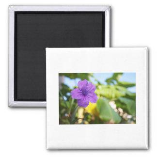 Flor púrpura imán cuadrado