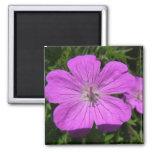 flor púrpura imán de frigorifico