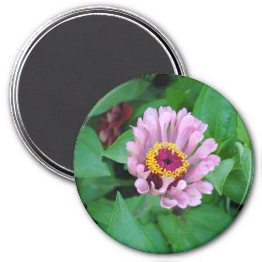 Flor púrpura imán para frigorifico