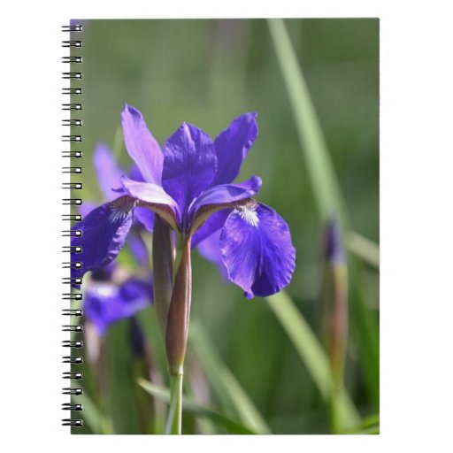 Flor púrpura libros de apuntes con espiral