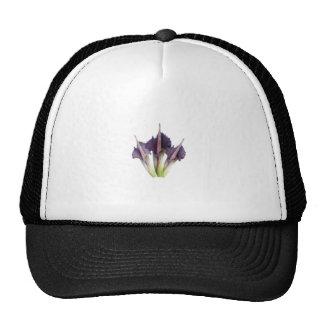 Flor púrpura linda gorra