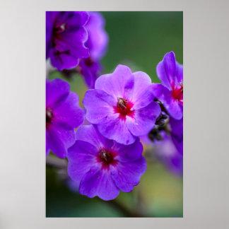 Flor púrpura impresiones
