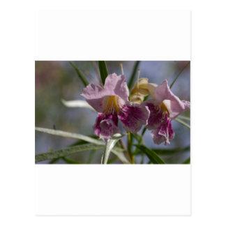 Flor púrpura postales