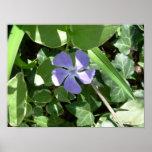 Flor púrpura posters