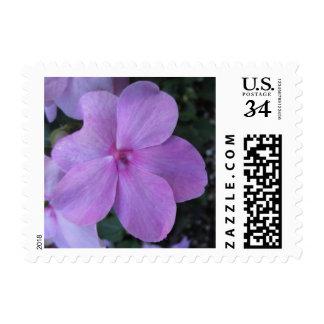 Flor púrpura rosada de Impatiens Franqueo