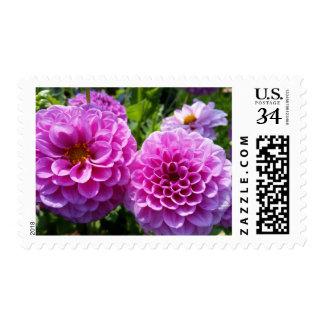 Flor púrpura envio
