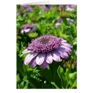 Flor púrpura felicitacion