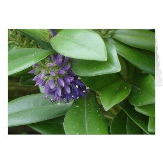 Flor púrpura tarjeta de felicitación