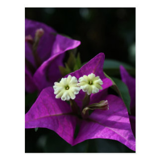 Flor púrpura postal