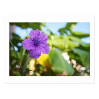 Flor púrpura tarjeta postal