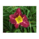 Flor púrpura y amarilla postales