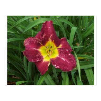 Flor púrpura y amarilla tarjeta postal
