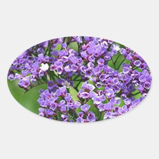 Flor púrpura y blanca de Statice limonium en la Colcomanias Óval