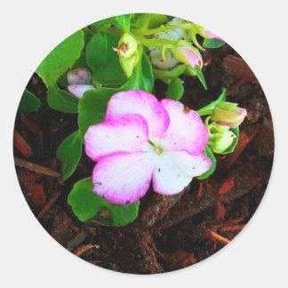 Flor púrpura y blanca pegatinas redondas