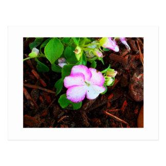 Flor púrpura y blanca tarjetas postales