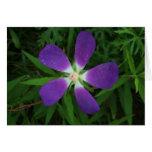 Flor que presenta como morada púrpura de la estrel tarjetas