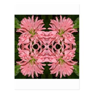 Flor reflexión enero de 2013 rosado postales