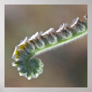 flor rizada verde del tiempo de primavera póster