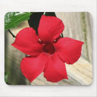 Flor roja alfombrillas de ratón