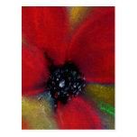 Flor roja, amapola tarjetas postales
