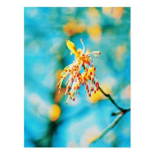 Flor roja amarilla del árbol postales