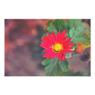 Flor roja arte con fotos
