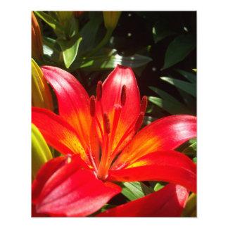 Flor roja arte fotografico