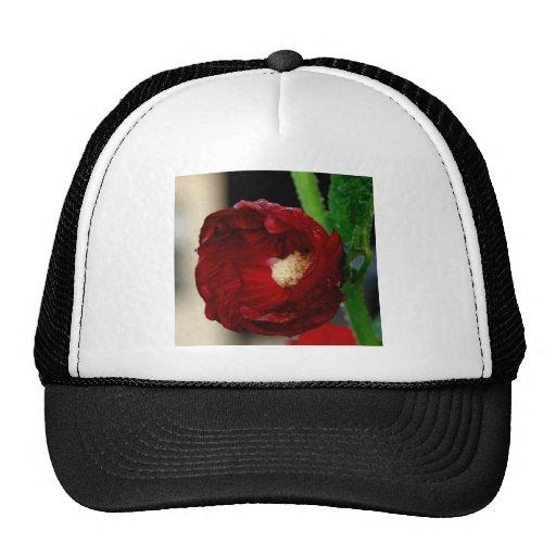 Flor roja bonita gorras