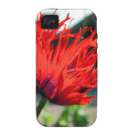 Flor roja brillante de la amapola iPhone 4/4S carcasa