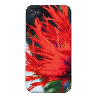 Flor roja brillante de la amapola iPhone 4 cobertura