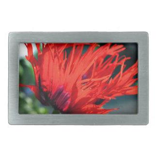 Flor roja brillante de la amapola hebillas cinturón