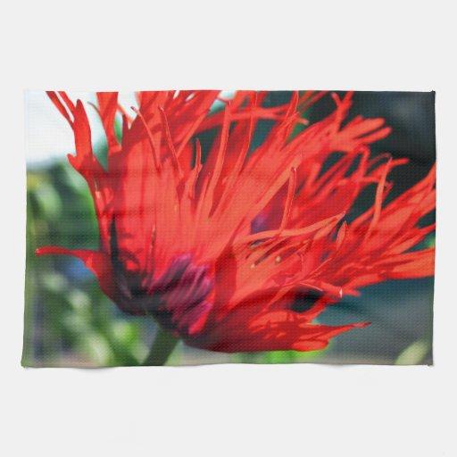 Flor roja brillante de la amapola toallas de cocina
