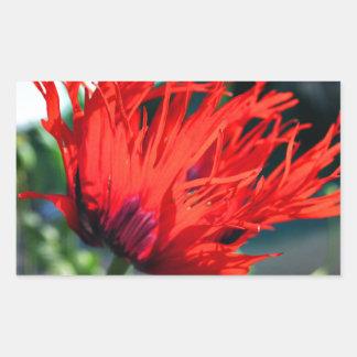 Flor roja brillante de la amapola rectangular altavoces