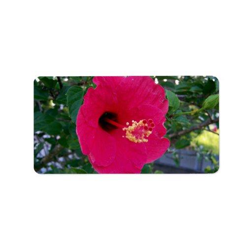 Flor roja brillante del hibisco etiqueta de dirección