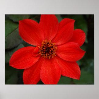 Flor roja brillante impresiones